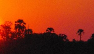 Red Orange Glow of Firestorm with Tree Silhouette